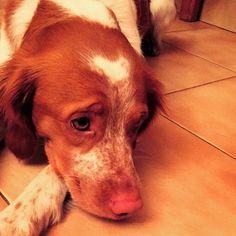 My little pretty dog! Le plus Fidel des compagnons.