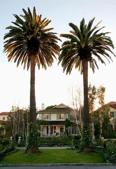 California Beach Cottage - Old House Journal Magazine Palm Tree Pictures, Patina Style, House Journal, Shingle Style Homes, California Beach, Southern California, American Houses, Coastal Cottage, Beach Cottages
