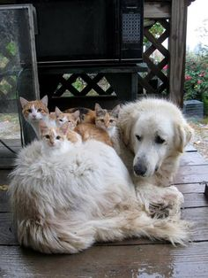 A dog with her kittens