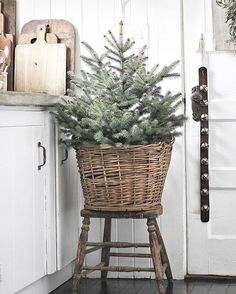 Here are best Small Christmas Trees Ideas for your Christmas home decor. These Mini Christmas Trees are ideal for table top decor or centerpiece or kitchens Small Christmas Trees, Simple Christmas, Christmas Home, Christmas Holidays, Christmas Crafts, Christmas Decorations, Xmas, White Christmas, Indoor Christmas Lights