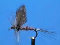 Image result for isonychia fly