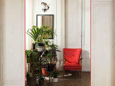 The 25 Best Indoor Plants  | iVillage.ca