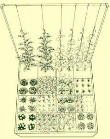grow our own food - a must to incorporate into our yard design