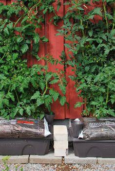 http://muonamiehenmokki.blogspot.fi/search/label/Kasvimaa