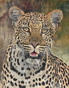 Large Custom Big Cat Painting - From your photo - Lion Leopard Cheetah Cougar Tiger Jaguar Panther Beautiful Cats, Animals Beautiful, Big Cats, Cats And Kittens, Animals And Pets, Cute Animals, Wild Animals, Big Cat Family, Wild Tiger