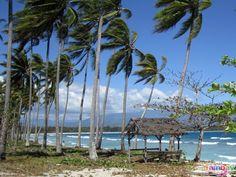 Coconut Trees at Dahican Beach Davao, Marina Bay Sands, Philippines, Coconut, Trees, City, Beach, Water, Outdoor