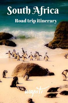 This South Africa itinerary for 2 weeks takes you from Cape Town to Port Elisabeth past highlights such as The Cape of Good Hope and the Garden Route. Travel Photographie, Africa Destinations, Holiday Destinations, Travel Destinations, Travel Usa, Travel Tips, Travel Videos, Hawaii Travel, Budget Travel