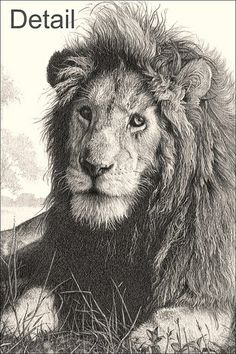 Lion Country detail by kjhayler, via Flickr