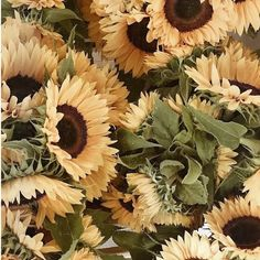 """Wallpaper Iphone Flores - like-fairy-tales:""""By: Dominika Brudny Cute Wallpapers, Wallpaper Backgrounds, Iphone Wallpaper, Beautiful Roses, Beautiful Flowers, Sunflowers And Daisies, Sun Flowers, Sunflower Pictures, Sunflower Wallpaper"""
