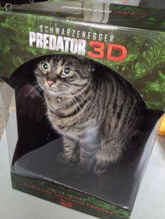 Dressed Up Cat - Bing Images
