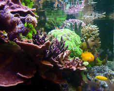 When I Dream, Dream About Me, Fish Friday, Recurring Dreams, Dead Fish, Reef Aquarium, New Tank, Beautiful Fish, Corals