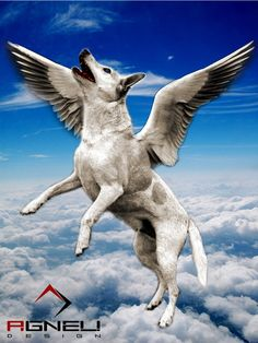 Bird dog at heaven's gates