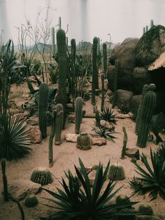 Content-cactus: I went to a zoo and they had a cacti section...