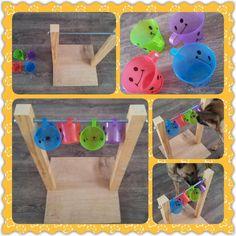 Spel 114 (hondenspel hond spel denkwerk hersenwerk brain dog game play diy) www.facebook.com/denkspellenvoorjehond