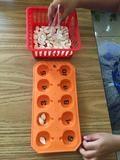Montessori activity trays