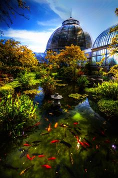 Koi Pond outside the Anna Scripps Whitcomb Conservatory on Belle Isle in Detroit, MI, photo by Sal Rodriguez