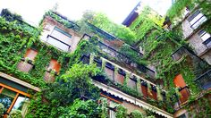 cliff-like milanese apartment facades covered in plants