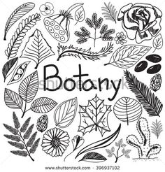 Botany biology doodle handwriting icons plants and trees in white isolated paper background for science education presentation or subject title, create by vector