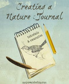 Creating a Nature Journal - book suggestions, free sketching & watercolor lessons,  and journal inspiration