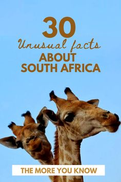 Marvel at these unusual facts about our beautiful country. South Africa has made history in a number of fields and is home to some pretty spectacular natural wonders that can be explored! Facts About South Africa, African Countries, Countries Of The World, Facts For Kids, Fun Facts, Africa Activities For Kids, Unusual Facts, Study History, Important Facts