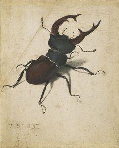 AlbrechtDürer - Hirschkäfer (1505)