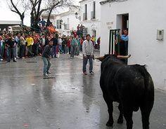 Suelta de novillos en Benalup-Casas Viejas. Cádiz. Andalucía. #toros