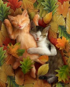 Autumn Nap I love this picture!!