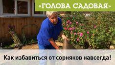 Голова садовая - Как избавиться от сорняков навсегда!