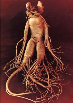 http://www.cnseed.org/chinese-changbai-mountain-white-ginseng-root-slice.html
