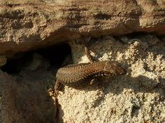 Kleiner Gecko