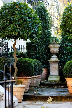 Container Gardening - An Answer To Minimal House For Increasing Vegetation Mad About-Garden-Design-Topiary In London Topiary Garden, Garden Urns, Garden Shrubs, Topiaries, Garden Plants, Boxwood Garden, Topiary Plants, Garden Shade, Boxwood Topiary