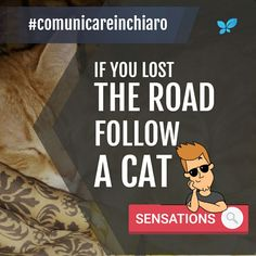 If you lost the road follow a cat.  #cats #cat #instacat #instacats #followforfollow #roadtrip #road #sensation #sensations #cartoon #mind #instamoment #instago #insta #instagood #instame #instayou #instagram #comunication #advertising #digital #........ #insta........ #instayou #instame  #comunicazione #seo #consultant #banner #copertina #blangiforti #comunicareinchiaro #seo #advertising #digital #marketing