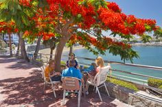 "Arguineguin tree with flowers and table: Photo from the classic satire article: ""25 Reasons Not To Visit Gran Canaria"""