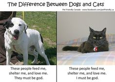 The Difference Between Dogs and Cats | Pet Lovers Forum & Pet Community