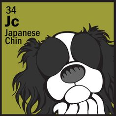 34-toy-japanese-chin