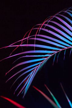 Pearly Neon Objects Photography