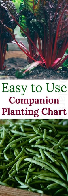 Companion Planting Chart {Carrots love Tomatoes One of my favorite gardening books!} I know about you, but I am a big fan of companion planting. Companion planting operates on the basic premise that certain plants play nicer together than Companion Planting Chart, Companion Gardening, Gardening Books, Container Gardening, Gardening Tips, Pallet Gardening, Kitchen Gardening, Gardening Websites, Garden Care