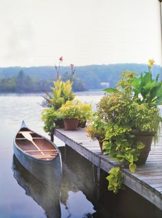 plants on the dock