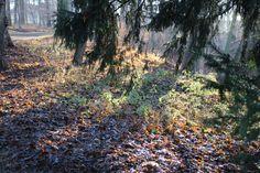 Herbstrundgang