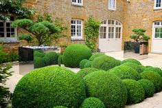 Jake Hobson - Japanese Cloud Pruning Specialist, Topiary Expert and Founder of Niwaki Boxwood Landscaping, Boxwood Garden, Garden Hedges, Topiary Garden, Backyard Landscaping, Fence Garden, Garden Tips, Herb Garden, Vegetable Garden