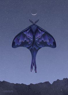 Part of my Nightbringers series. Tattoo Papillon, Moth Drawing, Academic Drawing, Moth Tattoo, Monet Paintings, Art Folder, Paper Artwork, Arte Horror, Aesthetic Art
