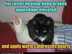 funny broken leg - Dump A Day Funny Animal Memes, Cute Funny Animals, Funny Animal Pictures, Funny Cute, Cute Cats, Funny Pics, Funny Kitties, Animal Humor, Grumpy Cats