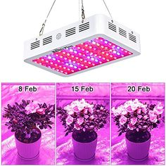 King Plus LED Grow Light Double Chips Full Spectrum with UV&IR for Greenhouse Indoor Plant Veg and Flower : Garden & Outdoor Indoor Grow Lights, Led Garden Lights, Best Led Grow Lights, Aquaponics Fish, Fish Farming, Growing Plants Indoors, Indoor Greenhouse, Plant Lighting, Grow Tent