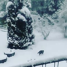 Whoo Hooo!! ..Snow's back!..and it's the fluffy dry snow I like!! 😸🐾⛄ ..'catch you later!!  .  .  #funfunfun #catitude #running #fitness #healthy #snowmageddon #weareinfinland #thefinnishcat #mollycatfinland #lumi #snö #snow #gooutside #instacat #catsagram #caturday #coldweather #winter #猫 #katzen #katter #pets #catoftheday #boomerang #catsofinstagram #cat #catlover #kissa #cute #finland