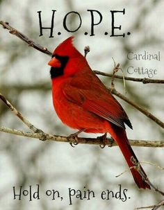 Thank You, Jesus! Mom would have loved this. Great Quotes, Funny Quotes, Inspirational Quotes, Qoutes, Motivational, Cardinal Birds Meaning, Prayer For Stress, Bird Quotes, Grieving Quotes