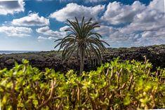 Jardín de Cactus Lanzarote --- #lanzarote #canarias #canaryislands #kanarischeinseln #visitlanzarote #cactus #kreuzfahrt #cruise #aidaprima #aidaprimamomente #sonyimages #sonyalpha #alphaddicted #sonya7riii #lpfanphoto #lovetotravel #getlost #explorer #createexplore #exploretocreate #travelphoto #travelworld #keepexploring #theglobewanderer #roamtheplanet #letsgosomewhere #exploretheglobe #instapassport #instatraveling #igtravel