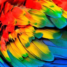 Parrot feathers wall art art print impresión por Chachaprints