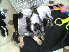 Two very tired puppies i love them to bits