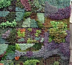 Vertical+Wall+Planters+With+Succulents | Succulent Plants Wall