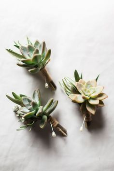 Succulent Boutonnieres, love! Chic Garden Wedding at Verandas Beach House | Katie Jackson Photography